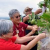 Seniors, Veterans Pick Flowers For Pre-Memorial Day Lei-Making Event
