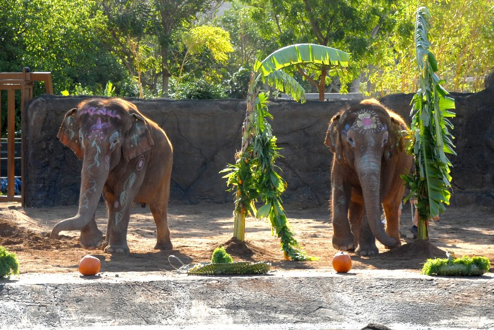 Come see the elephants, ride your bike to the zoo and get in for free!