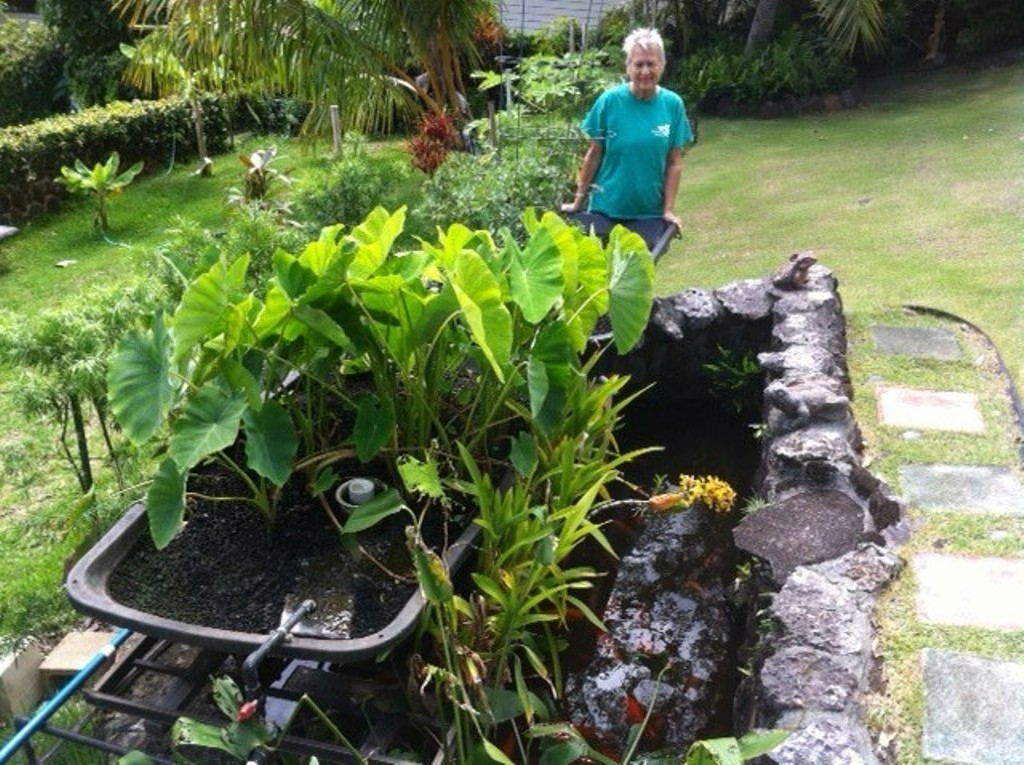 Urban gardener Pat Chung and her aquaponics system