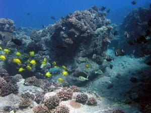 Study Highlights Opportunity to Restore Abundance to Hawaiian Reef Fisheries
