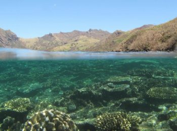 UH-led Research Shows Forest Conservation Can Aid Coral Reefs