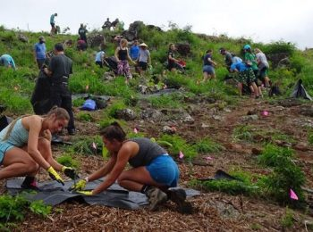 Crowdfunding Campaign Created to Help Restore Hawaiʻi Ecosystems