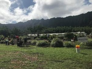 Growing Pono Research in Waimānalo