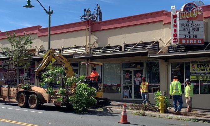 Waialae_tree_planting_pic_for_web