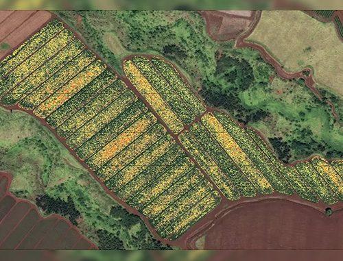 manoa-ctahr-droneimagefield